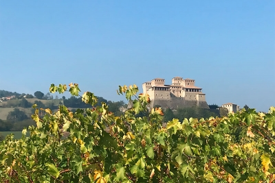 Wine cellars in Parma